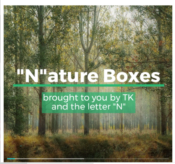 Transitional Kindergarten Nature Box Video